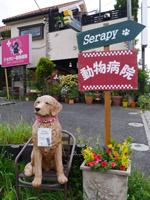 東京都のセラピー動物病院様
